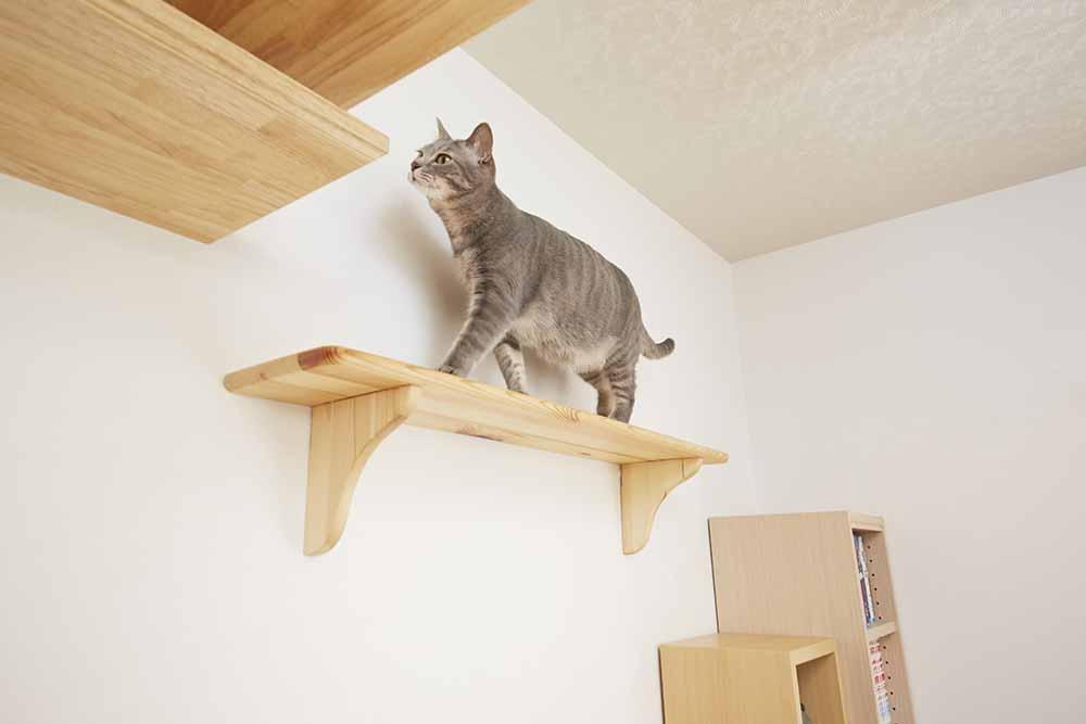 vol.27 7匹の愛猫と暮らす「ネコハウス」